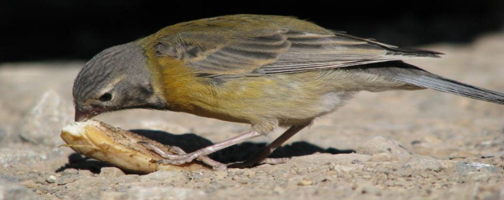 La alimentación de las aves.