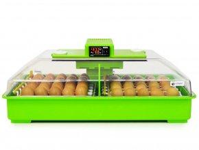 incubadora pollos