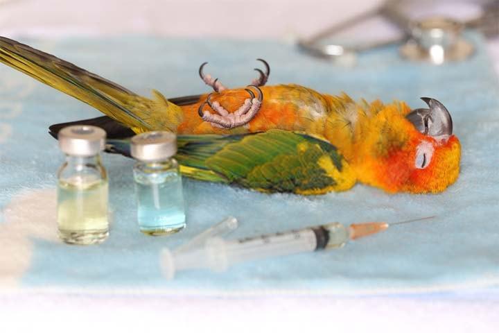 enfermedades de los pajaros y las aves