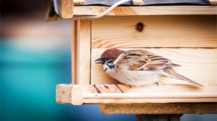 salmonelosis en aves