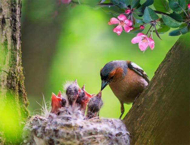 cria de pajaros y aves
