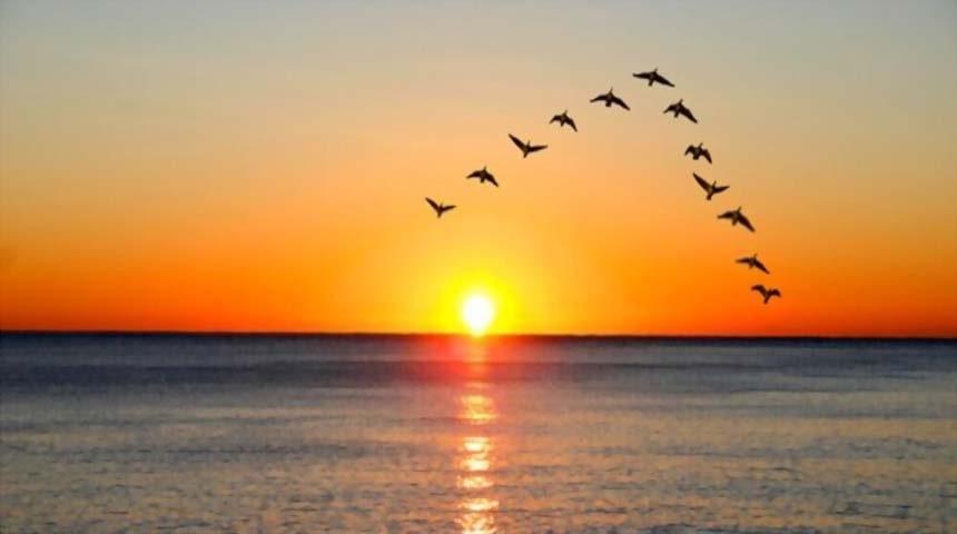 aves volando en v