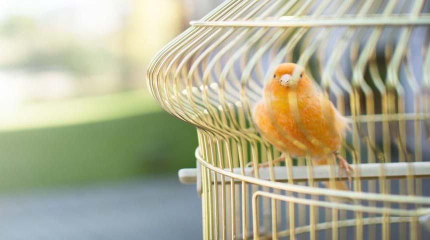 jaula con canario naranja