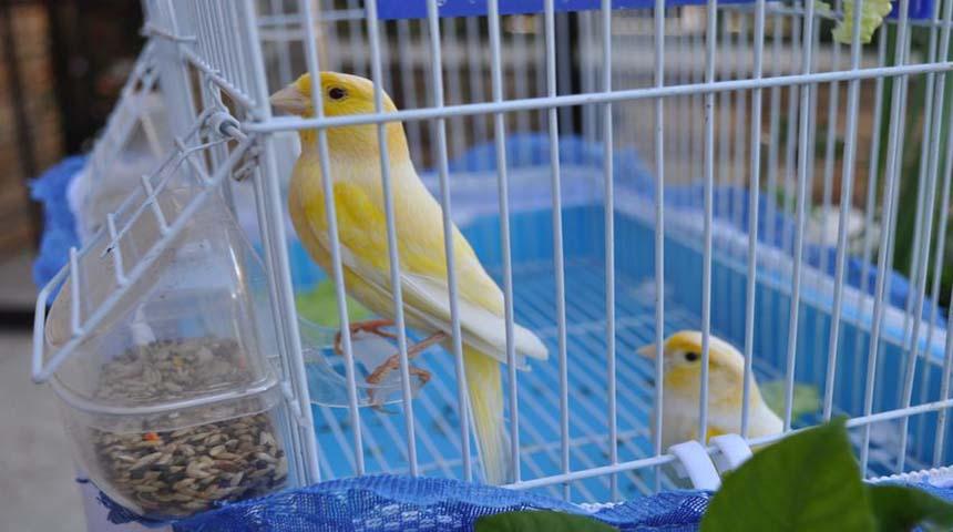 jaulas de canarios