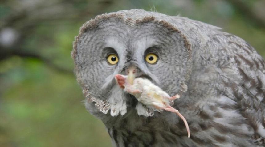 Clasificacion de las aves segun su alimentacion. Aves carnívoras
