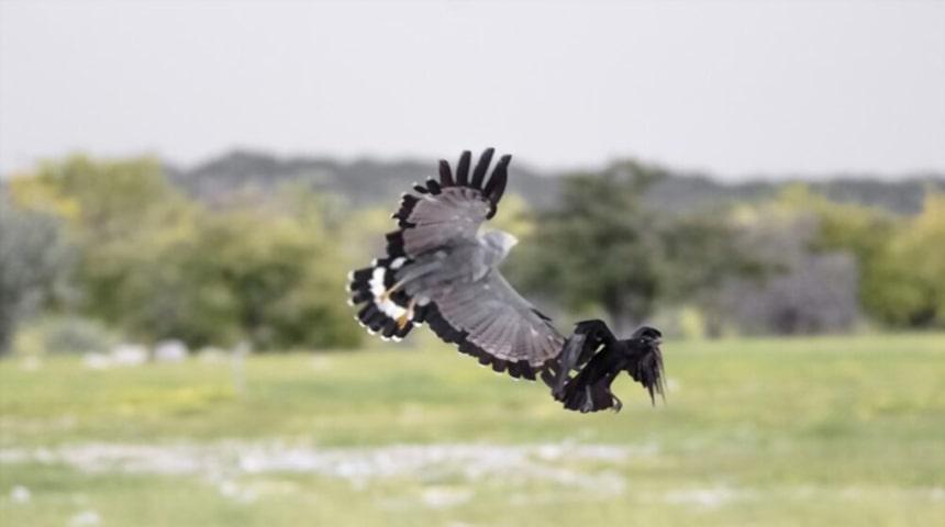 Clasificacion de las aves segun su alimentacion. Pájaros avívoros