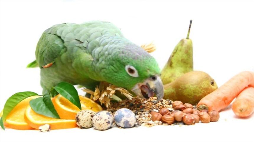 Clasificacion de las aves segun su alimentacion