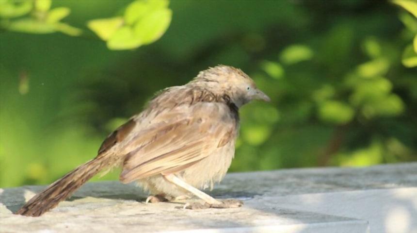 Enfermedades digestivas en pajaros y aves