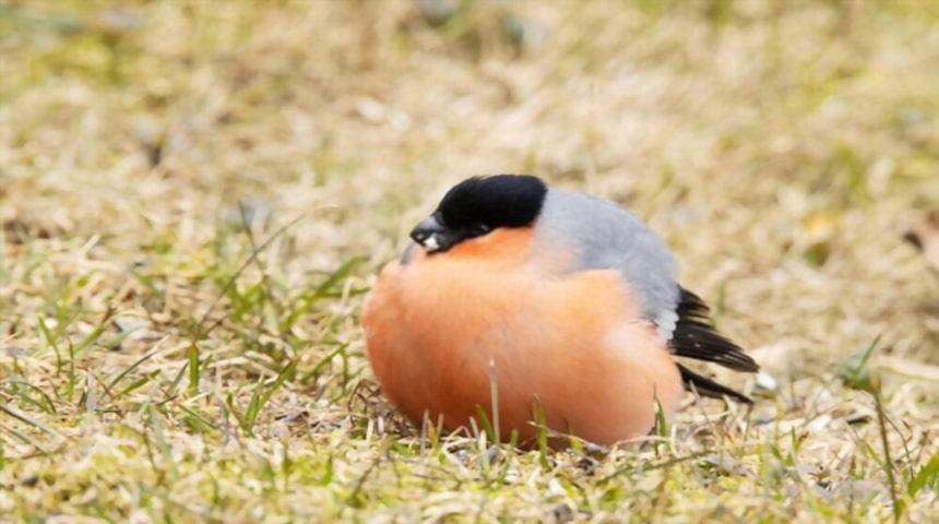 Enfermedades digestivas en aves y pajaros