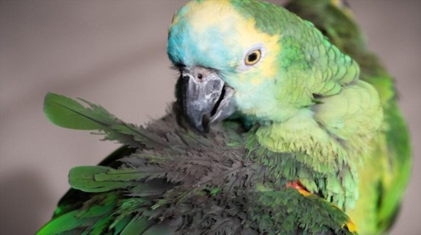 Enfermedades infecciosas de las aves