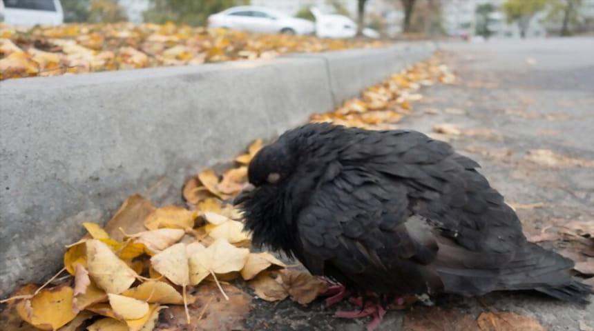 Enfermedades infecciosas en las aves