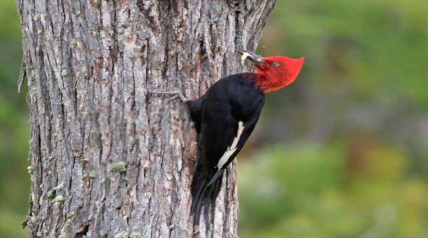 clasificacion de las aves segun su alimentacion. Pájaros insectívoros