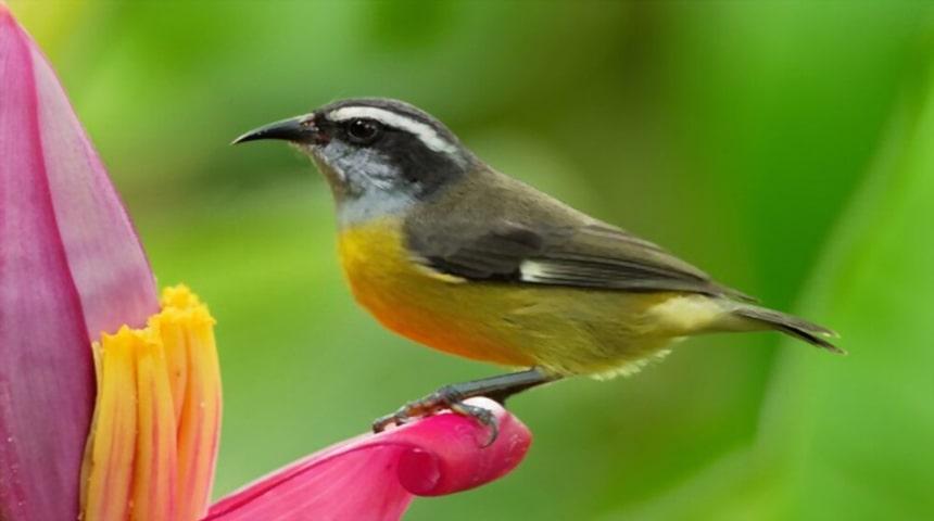 clasificacion de las aves segun su alimentacion. Pájaros polinívoros