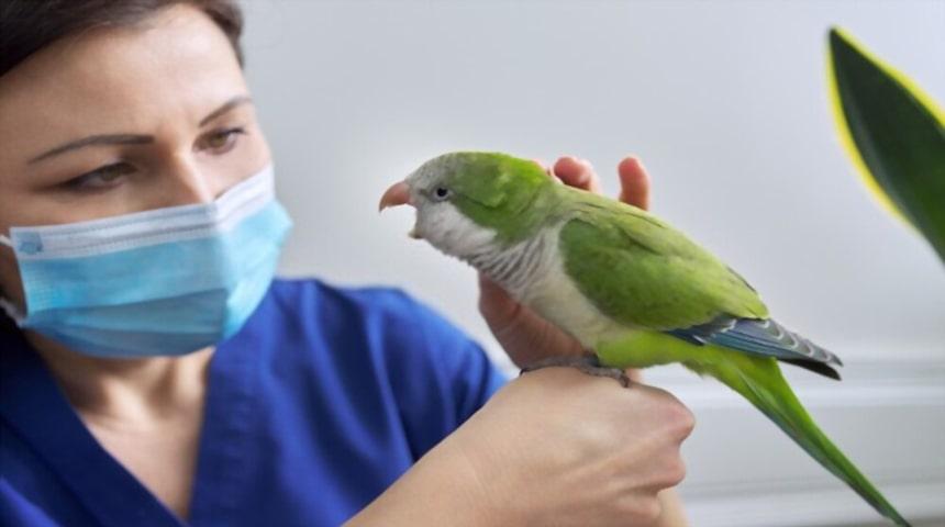 enfermedades mas comunes en aves