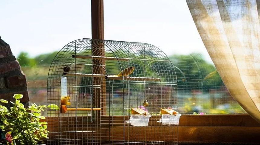 jaula con canarios