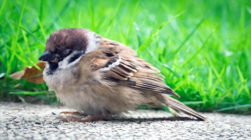 Como cuidar un pájaro enfermo
