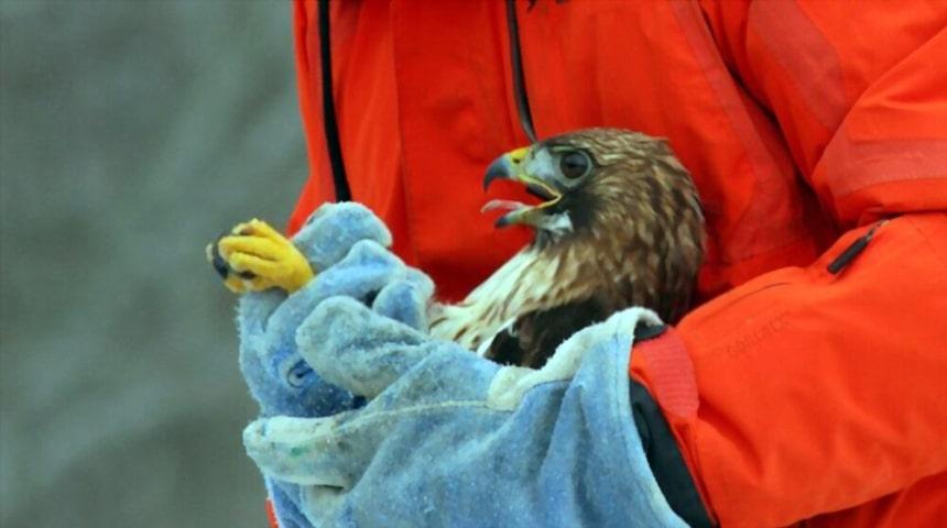aportar calor a la hora de cuidar un pájaro enfermo