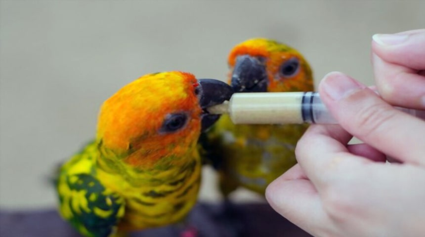 nutricion de los pájaros enfermos