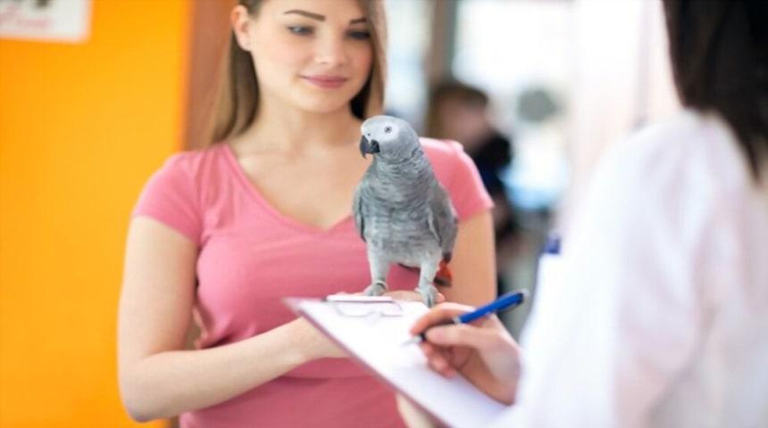 seguimiento del veterinario al ave enferma